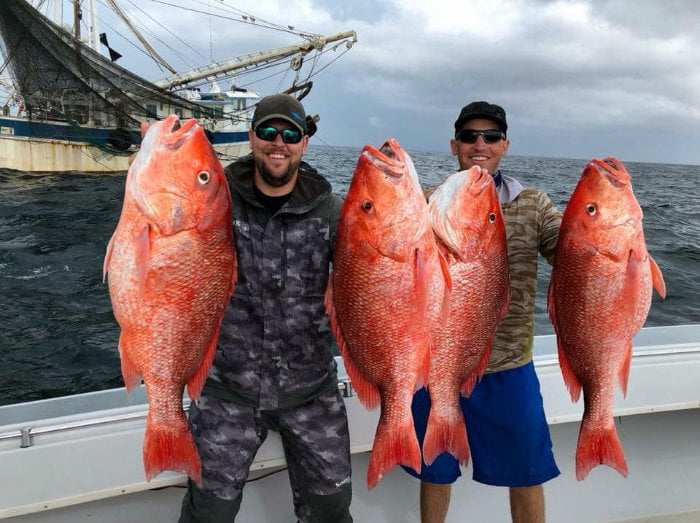 2 men holding 4 red snappers